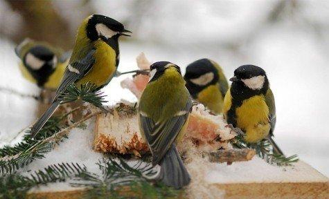 28. un 29. martā Putnu dienas Zoodārzā
