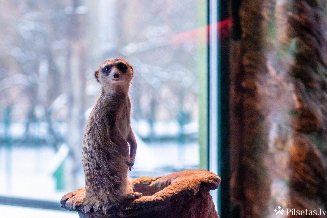 Latgales zoodārzs uzsāk vērienīgu paplašināšanas projektu
