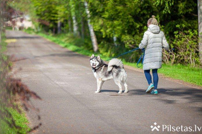 Jūrmalā veidos suņu pastaigu laukumu
