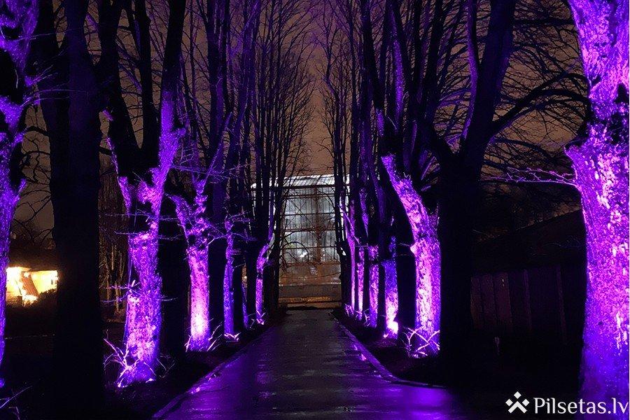 Ziemas gaismas dārzs