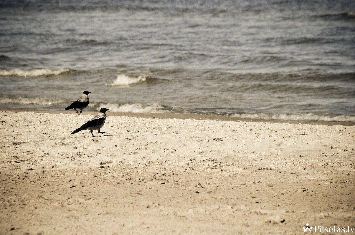 Jūrmalnieku aptauja: 87% iedzīvotāju apmierināti ar dzīves kvalitāti Jūrmalā